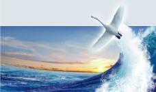 天鹅展翅(分层不精细)图片