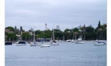 玫瑰灣 雪梨图片
