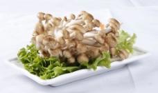 蟹味菇图片