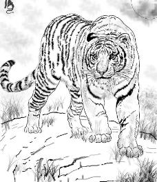 国画白描老虎~图片
