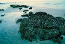 海岸礁石圖片