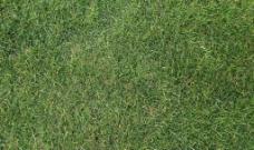 绿草2图片