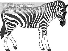 野生动物35