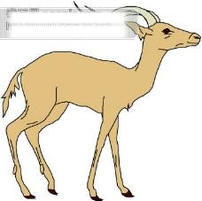 野生动物46