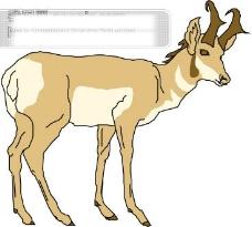 野生动物39