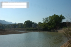 树 植物 水 风景