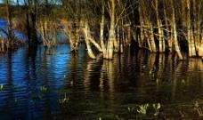 沼澤綠葉图片