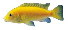 海洋鱼0090