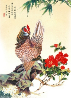 大花母鸡图片