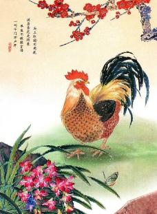 花公鸡图片