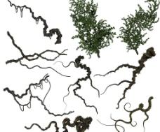 灌木丛图片