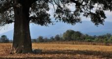 大树下图片