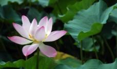 莲花2图片