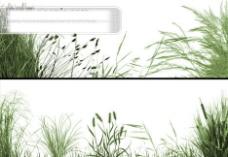 绿草芦苇笔刷组合