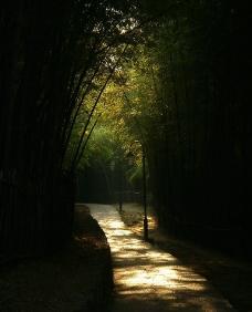 竹林小品图片