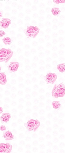 玫瑰之约图片