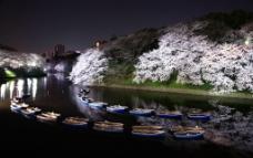 月夜樱花图片