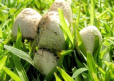 蘑菇 蔬菜 菌类图片