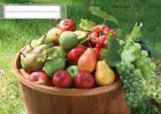 水果园各式各样水果