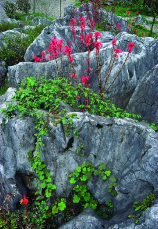 石海春色图片
