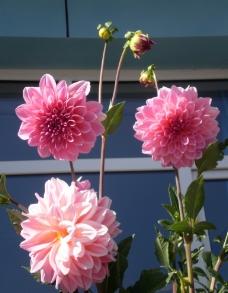 三朵漂亮的花图片