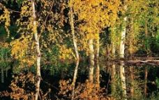丛林之美图片