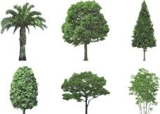 綠樹 樹木圖片