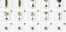 45款室内植物3图片